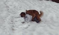 Šuo pasinaudoja bejėge mergina
