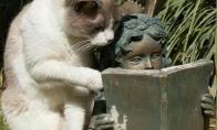 Nekantrus katinas