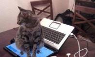 Kai paprašai katino nesedėti ant klaviaturos
