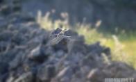 Ar matai pelėdą ? :)