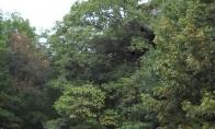 Didžiausias pasauly namas-medis