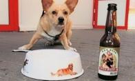 Šunų alus (5 nuotraukos)