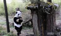Mokslininkai virto didžiąja panda (4 nuotraukos)