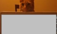 Tai tik katė.. :) (2 nuotraukos)