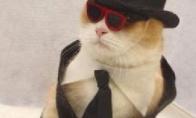 Kačių gimtadieniai (10 nuotraukų)
