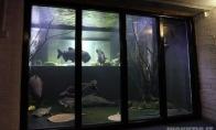 Akvariumas rūsyje