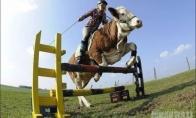 Ar karvė gali tapti arkliu ?