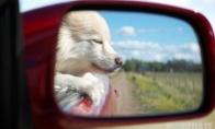 Gražiausi vaizdai - šoninio matymo veidrodėlyje