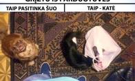Kačių ir šunų skirtumai