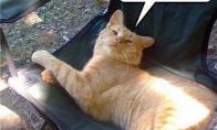 Katinas - tikras aktorius