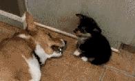 Pašėlusių gyvūnų GIF rinkinukas