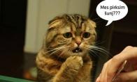 Liūdniausia diena katino gyvenime