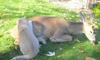 Eilinė gyvūnų draugystė