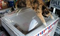 Katinai šią karštą dieną