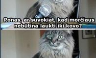 Šokiruojanti naujiena katinui