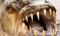 Žuvis mutantė