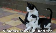 Pizdukai katinukai