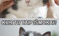 Katinų ekstazė