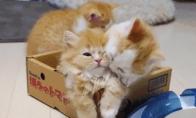 Mielų katinukų GIF rinkinukas