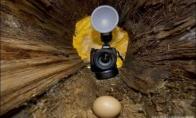 Kiaušinių vagystė
