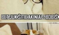 Petruškevičiau katinukas