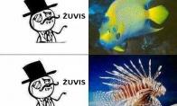 Žuvys, kurias pažįstu
