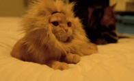 Mielų katiniukų GIF rinkinys