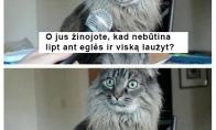 Katiną šokiruojanti tiesa