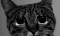 Katinuko kreipimasis į senmerges