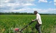 Kam jam reikalinga vejapjovė kukurūzų lauke?