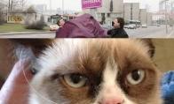 Zuokas prieš Grumpy Cat