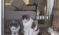 Katiniukai donžuanai