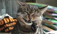 LOL katės