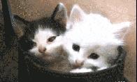 Linksmų ir mielų gyvūnų GIF rinkinys