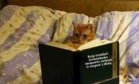 Katinų mokslai