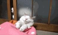 Be galo juokingų gyvūnų GIF rinkinys