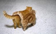 Kačių foto galerija