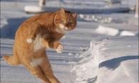Animuoti kačių paveikslėliai