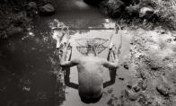Algio Griškevičiaus nuotraukos