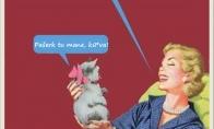 Ką iš tiesų mąsto katės