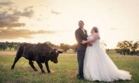 Smagiausių vestuvinių fotografijų rinkinys