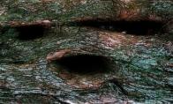 Medžiai-siaubūnai