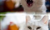 Katino savininko problema nr.1