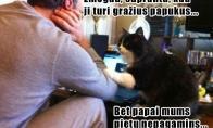 Katino filosofija