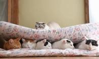 Linksmų gyvūnų GIF rinkinys