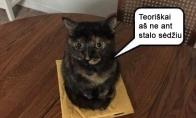 Katinas - aferistas