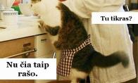 Kai vakarienę gamini su katinu