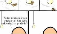 Ar tikrai drugeliai kvailesni už žmones?
