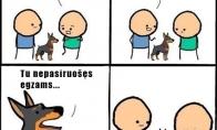 Pavojingiausias šuo
