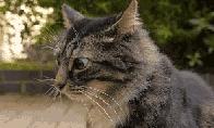 Išdykusių gyvūnų GIF rinkinys